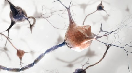 Parasympaattinen hermosto ja rentoutuminen